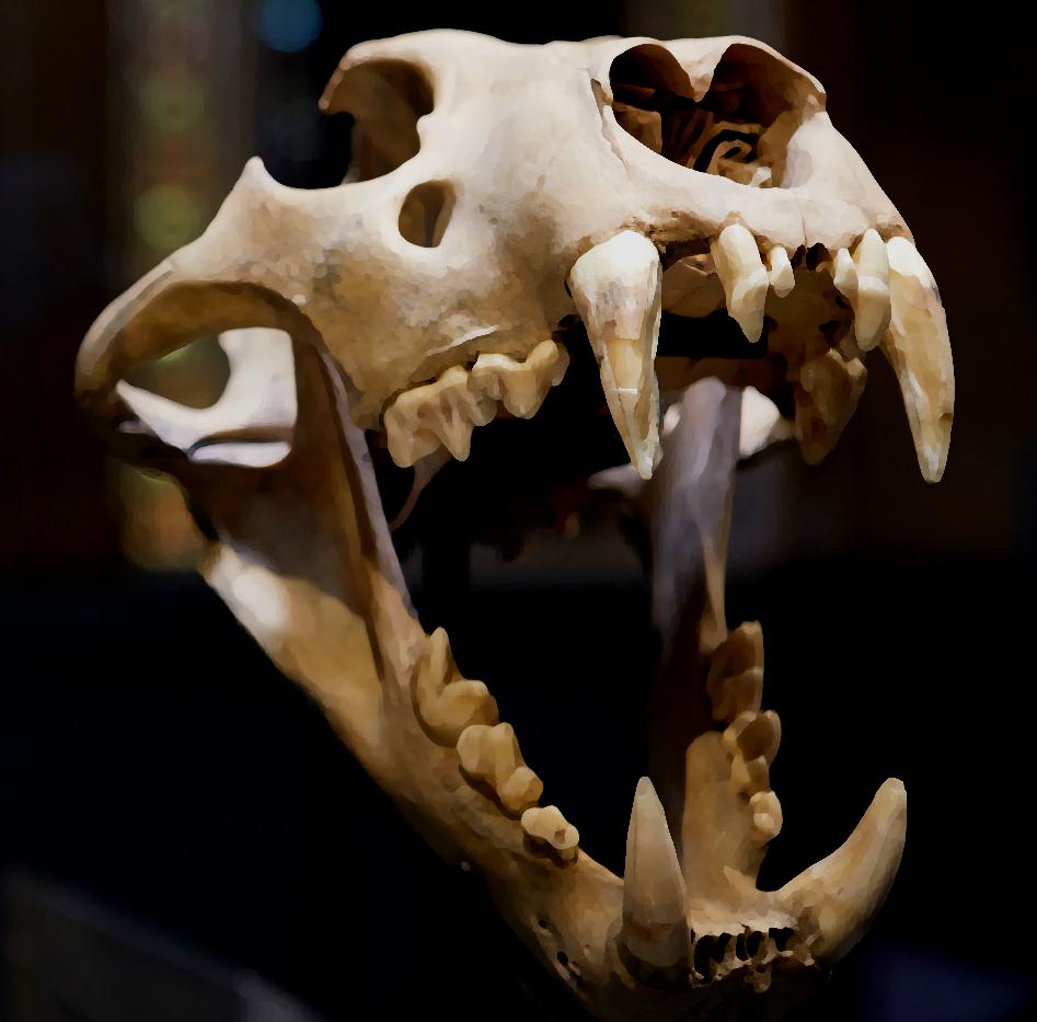 lion-skull-gallery-1000-sarah