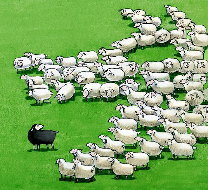 black_sheep_in_the_flock__cristina_bernazzani