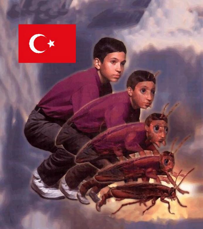 turkish-cockroach